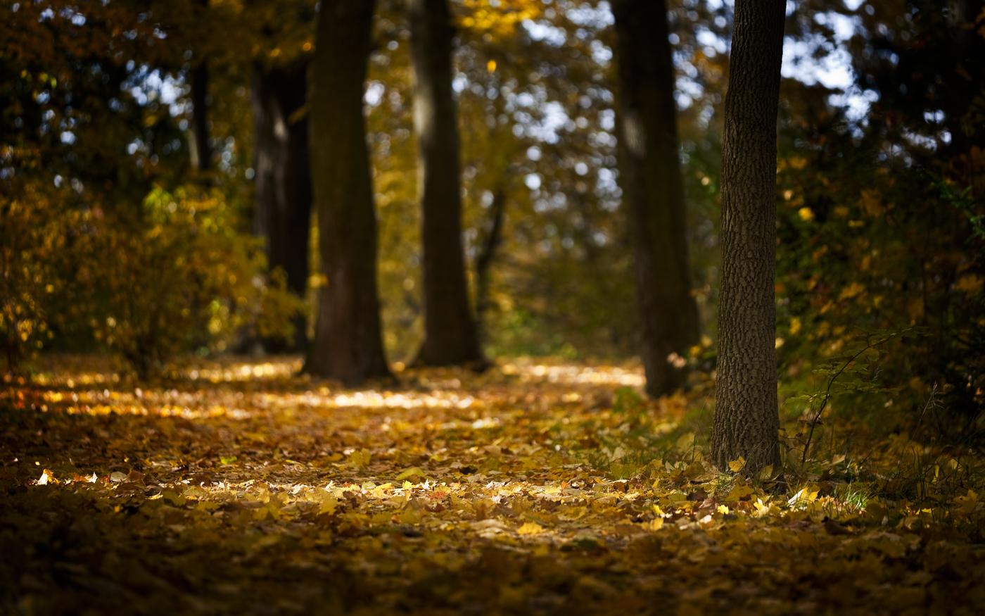 Landschaftsfotografie-Herbst