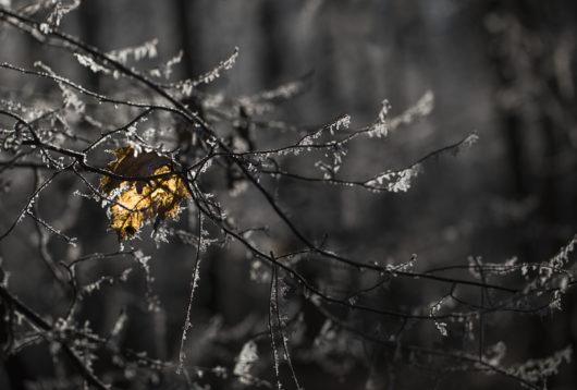 Morbide Pflanzen von Stefan Mayr